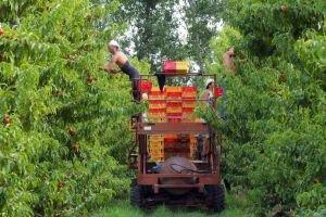 FRANCE-AGRICULTURE-FRUITS