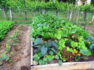 langouet-autonomie-alimentaire-permaculture-2